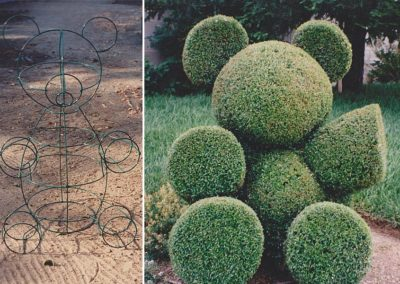 Bear Topiary: Planted and trained by Barbra Castro!