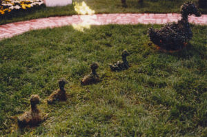 Topiary Ducks